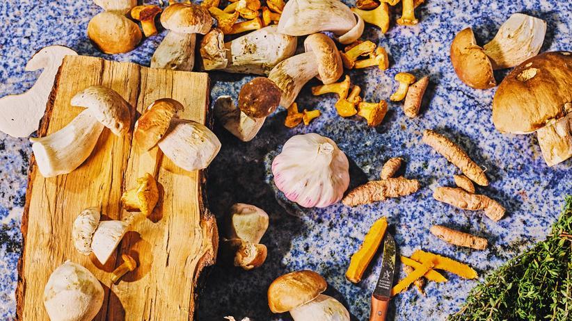 Pilzsuppe mit Kurkuma: Steht ein Superfood im Walde