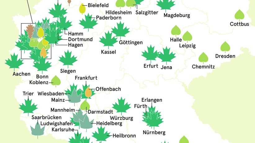 Bäume in der Stadt: Unter den Linden