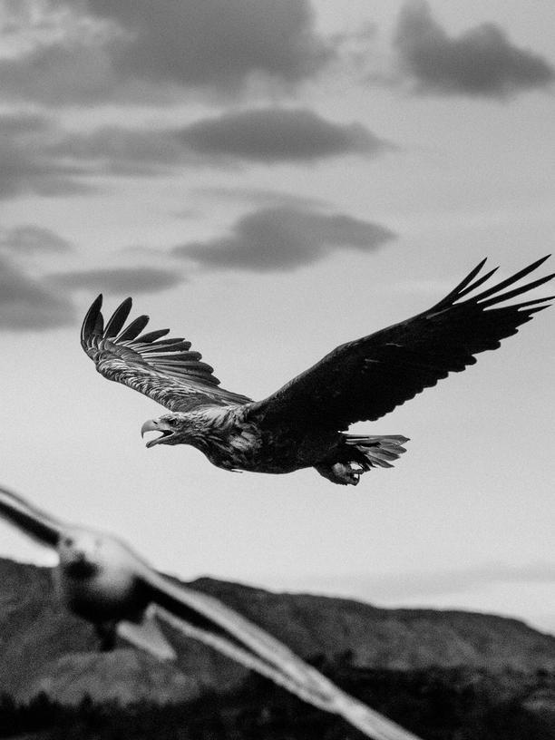 Paolo Pellegrin: Zwischen Himmel und Erde
