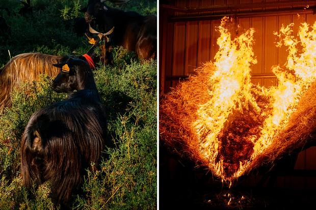 Waldbrände in Portugal: