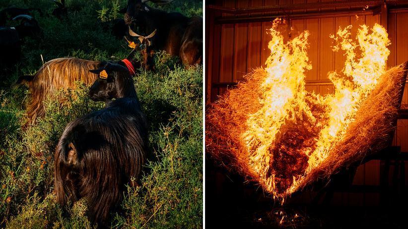 Waldbrände in Portugal: Der gute Hirte