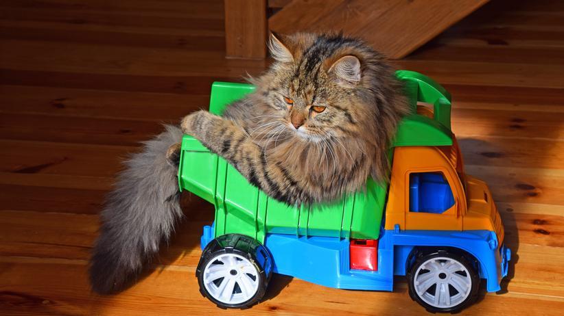 eBay Kleinanzeigen : Sind die Katzen noch zu haben?