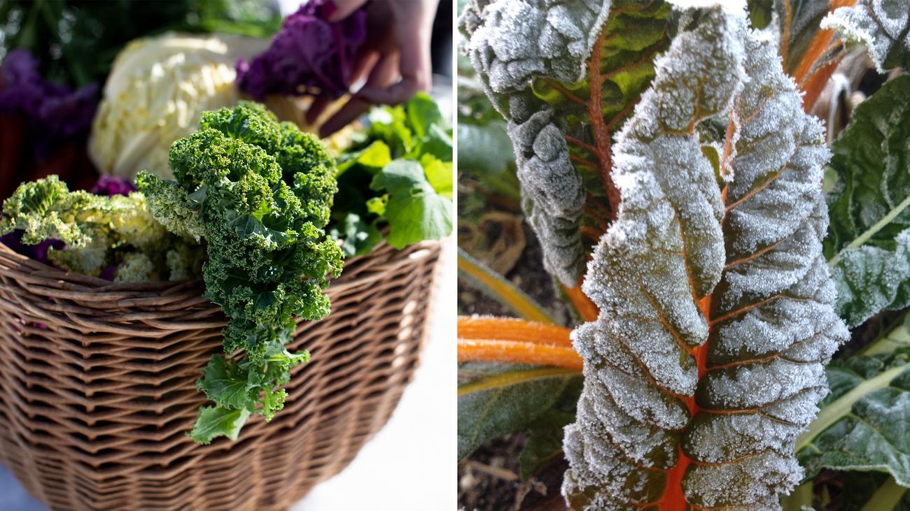 """Gemüseernte: """"Pflanzen können seit Jahrtausenden über den Winter kommen"""""""