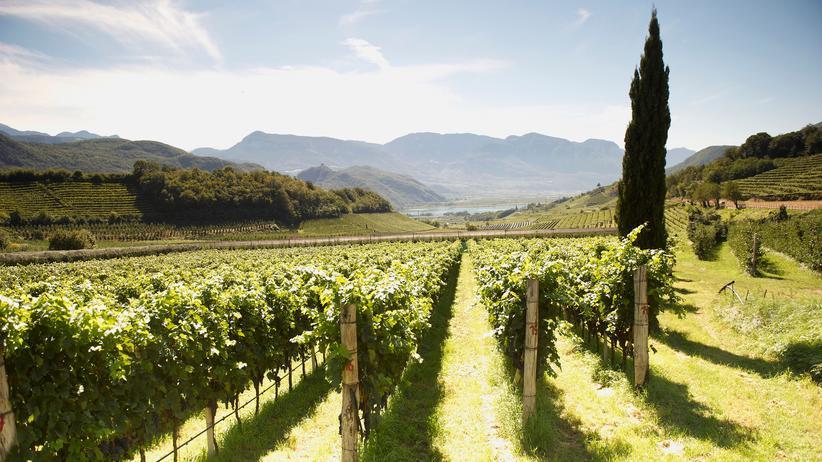 Wein: Winzer am Rande des Nervenzusammenbruchs