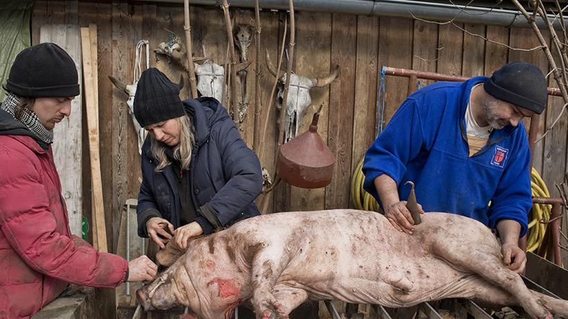 Hausschlachtung: Wir schlachten ein Schwein