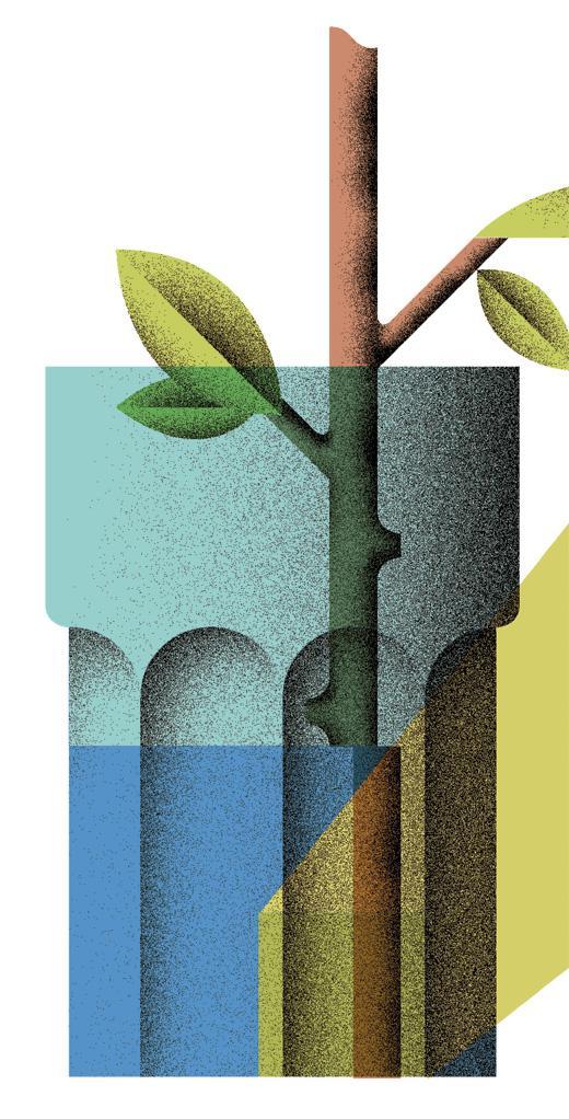 Wundert te pflanzen zu hause z chten zeitmagazin for Pflanzen zu hause