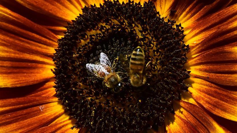 """Bienen: """"Die Biene weiß, wer sie ist"""""""