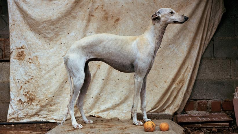 Fotografie : Ein Hundeleben