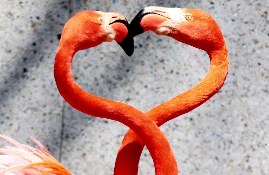 Partnerschaft: Zwei Flamingos in inniger Umarmung