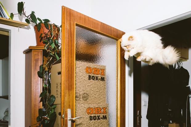 Katzen: Der springende Punkt