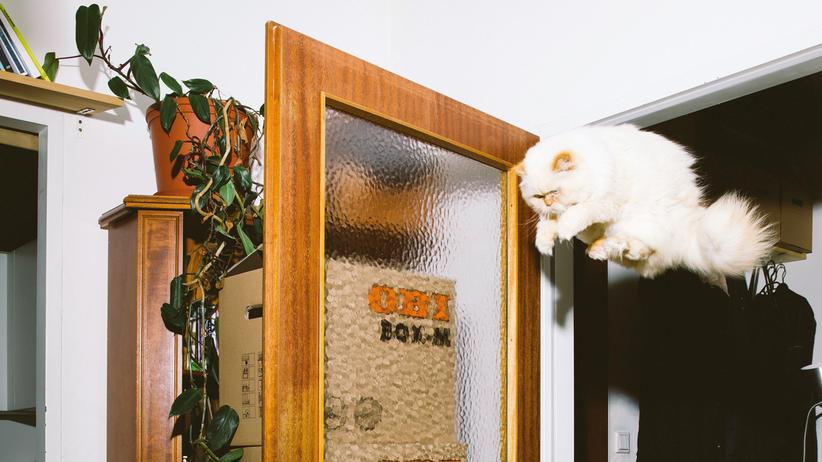 Katzen: Nur Liegen ist schöner