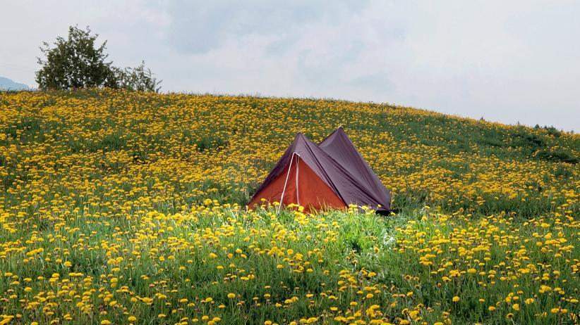Camping: Allein mit dem Löwenzahn