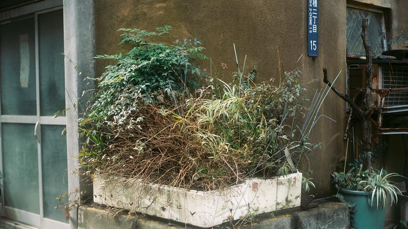 Japan: Im Land der heiligen Pflanzen