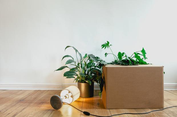 """Zimmerpflanzen: """"Wir sind den Pflanzen egal"""""""