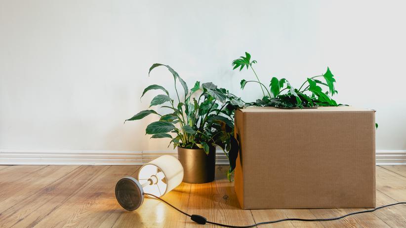 """Zimmerpflanzen: """"Pflanzen interessiert es nicht, ob es Menschen gibt"""""""