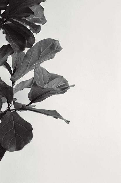 Zimmerpflanzen: Weg Mit Dem Gummibaum: 17 Tipps Für Pflanzen In ... Schone Passionsblume Pflege Tipps Zimmerpflanzen