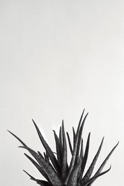 Zimmerpflanzen Sonnenfenster zimmerpflanzen weg mit dem gummibaum 17 tipps für pflanzen in der