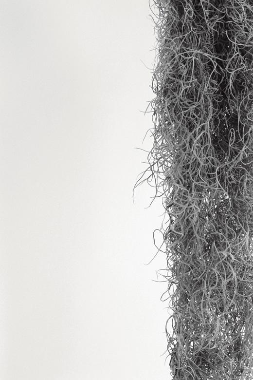 zimmerpflanzen weg mit dem gummibaum 17 tipps f r pflanzen in der wohnung zeitmagazin. Black Bedroom Furniture Sets. Home Design Ideas