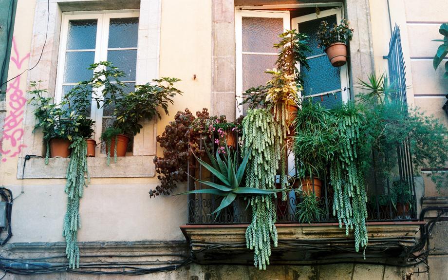Pflanzen es m ssen nicht immer geranien sein zeitmagazin for Evergreen pflanzen