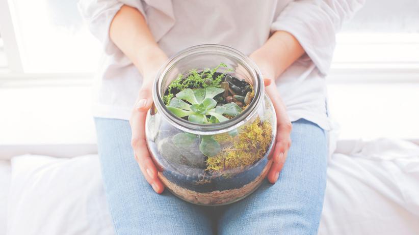Terrarium: Bubikopf im Einmachglas
