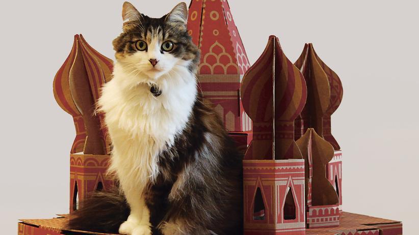 Architektur für Tiere: Katzen, die an Kathedralen kratzen