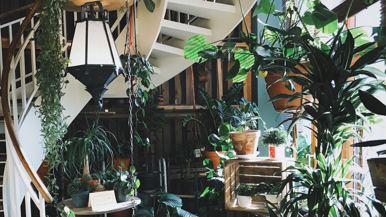 Biophilie Waldbaden im Wohnzimmer   ZEITmagazin