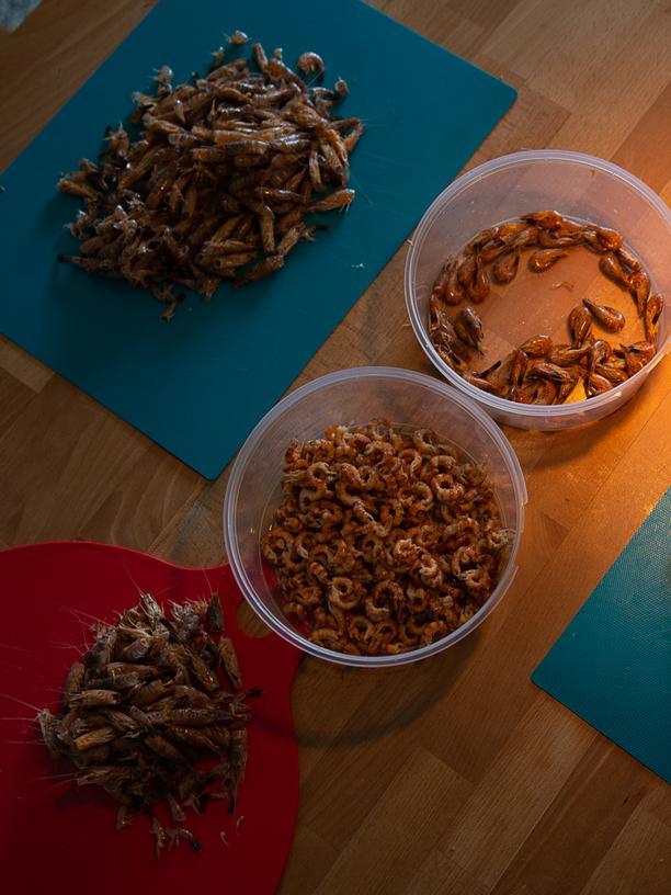 Krabbensuppe und Friesentorte: Die Krabbe hat mehr als nur ein Brötchen verdient